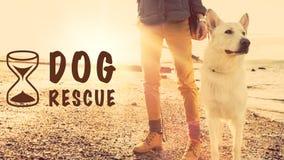 Hundräddningsaktionbegrepp royaltyfri bild
