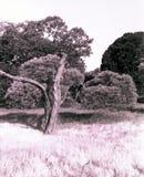 hundraårs- park sydney arkivbild