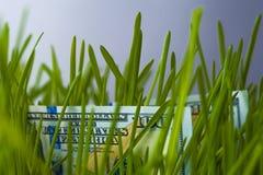 Hundra dollar räkningar i grönt gräs Fotografering för Bildbyråer