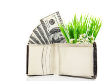 Hundred dollar banknotes in the purse Stock Images