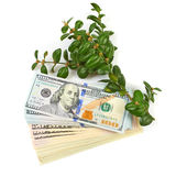 Hundred dollar bills and a branch of green bushes on a white bac. Kground Stock Image