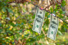 Hundred dollar bills weigh autumn clothespins Royalty Free Stock Images
