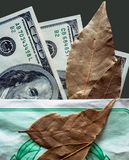 Hundred-dollar notes and bay leaf Stock Images