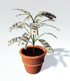 A hundred dollars banknote small tree in a vase. A small tree with one hundred dollars banknote instead of leaves, is planted in a earthenware vase with a symbol Royalty Free Stock Photo