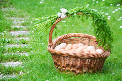 Hundred eggs. In the basket on the grass Stock Image