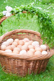 Hundred eggs Royalty Free Stock Photo