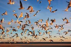 Coney Island hundred seaguls Stock Image