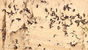 hundreds of birds scurry about in flight