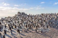 Hundreds of chinstrap penguins gathered on the rocks and enjoying the sun, Half Moon Island, Antarctic stock photography