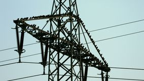 Crows on a power line. Hundreds of crows gathered on the huge mast of a overland power line stock video