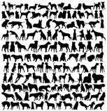 Hundreds of dogsilhouettes Royalty Free Stock Images