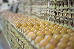 Hundreds of eggs awaiting buyers at a market Royalty Free Stock Image