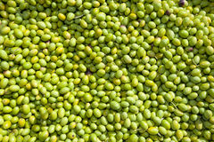 Hundreds of freshly picked green olives Stock Images
