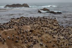 Bird Rock Birds Stock Image