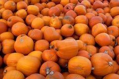 Hundreds of Organic Pumpkins Stock Images