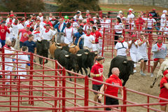 Hundreds Run With The Bulls At Georgia Event Royalty Free Stock Photography