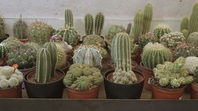 Cactus and succulent plants shop stock video footage