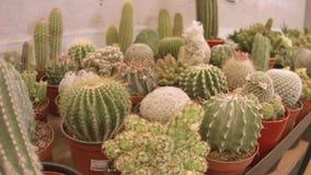 Cactus and succulent plants shop stock video
