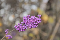 Hundreds and thousands branch. Love bubble branch with pink seeds Stock Photography