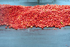 Hundreds Of Tomatos Piled High For Food Fight At Event stock photo