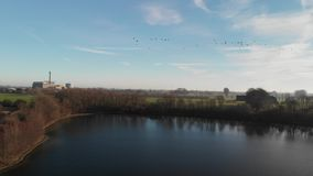 Hundreds of wild geese fly over a lake, in the background you can see the wonderland Kalkar, aerial view stock video footage