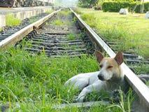 Hundsäng Royaltyfri Foto