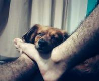 Hundsömn på min fot royaltyfri foto