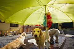 Hunds pöl Fotografering för Bildbyråer