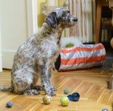 Hundsammanträde bland grupp av leksaker Arkivbild