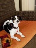 Hundsammanträde på den selektiva fokusen för soffa Arkivbild
