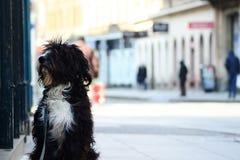 Hundsammanträde på en gata fotografering för bildbyråer