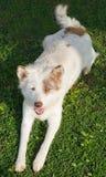 Hundsammanträde på jordning Fotografering för Bildbyråer