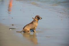 Hundsammanträde på stranden Royaltyfri Fotografi