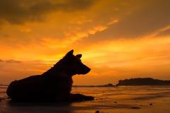 Hundsammanträde på stranden royaltyfri bild
