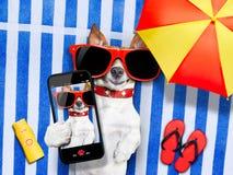 Hundselfie från semester Royaltyfria Bilder