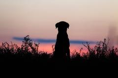 Hundshilouette Fotografering för Bildbyråer
