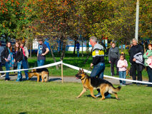 Hundshow Fotografering för Bildbyråer