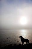 hundsilhouette Arkivfoton