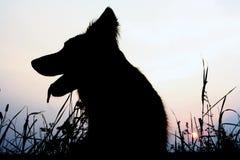 hundsilhouette arkivbild