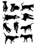 hundsilhouettes Royaltyfri Fotografi