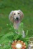 hundsitting Royaltyfria Bilder