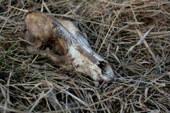Hundskalle på gräset royaltyfria foton
