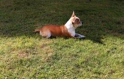 Hundskvallerbytta i morgonen Royaltyfria Bilder