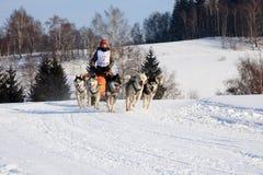 hundsled Fotografering för Bildbyråer