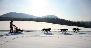 hundsled Arkivfoton