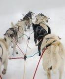 hundsled Royaltyfria Bilder