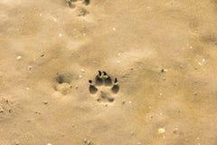 Hundspår i sanden royaltyfri foto