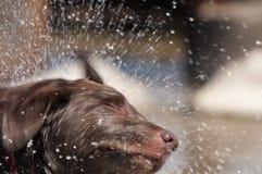 Hundsprej Arkivbilder