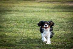 Hundspring i en parkera Royaltyfria Bilder
