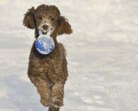 Hundspring i snö med världsbollen Arkivbild